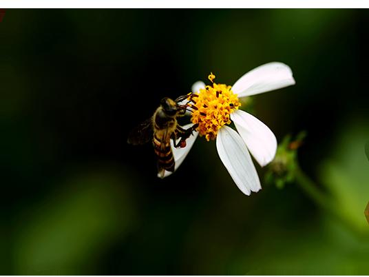 Sauvons les abeilles.